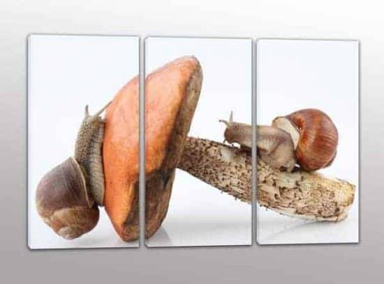 tris quadri moderni lumache