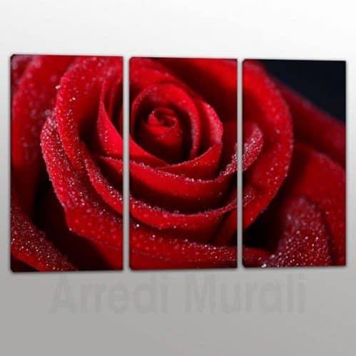 Quadri moderni rosa rossa da 3 tele
