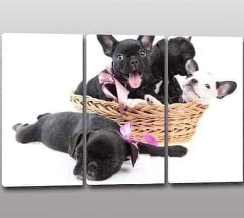 quadri moderni cuccioli cani