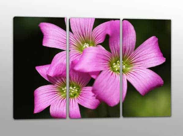 quadri moderni fiori rosa