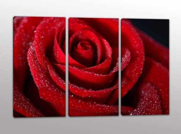 quadri moderni rosa rossa