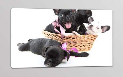 quadro moderno cuccioli cani