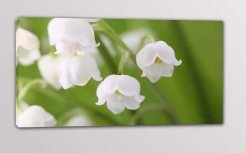 quadro moderno fiori bianchi