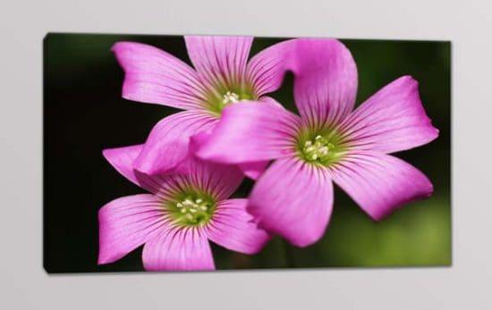 quadro moderno fiori rosa