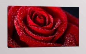 quadro moderno rosa rossa