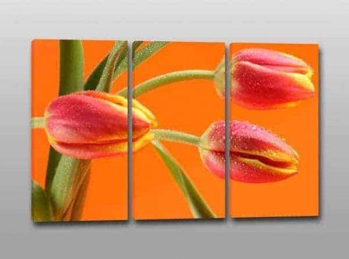quadri moderni fiori tulipani