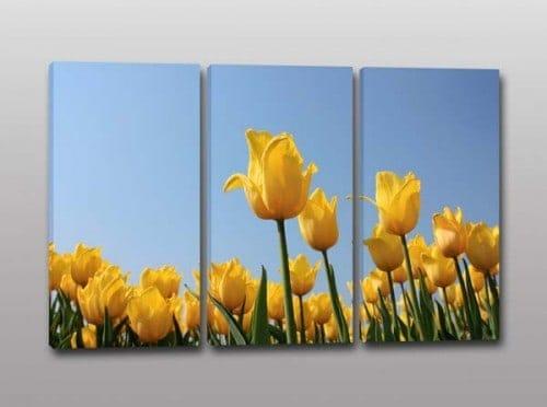 quadri moderni tulipani gialli