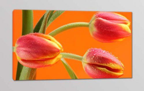 quadro moderno fiori tulipani