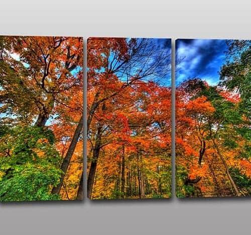quadri moderni natura bosco