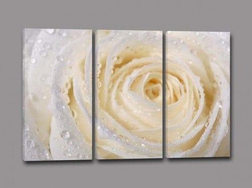 quadri moderni rosa bianca
