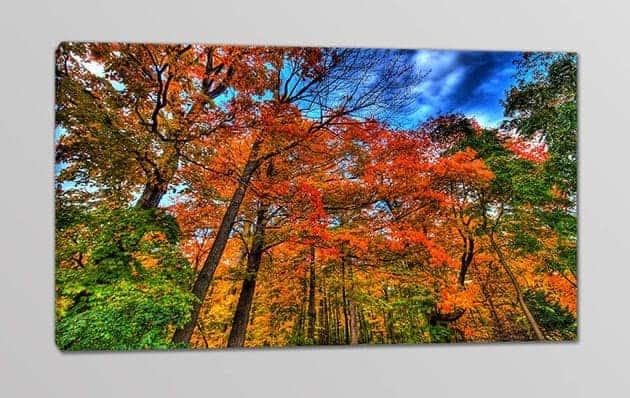 quadro moderno natura bosco