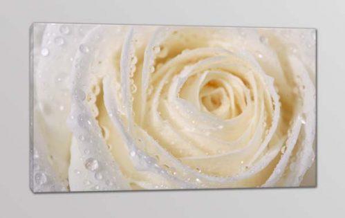 quadro moderno rosa bianca