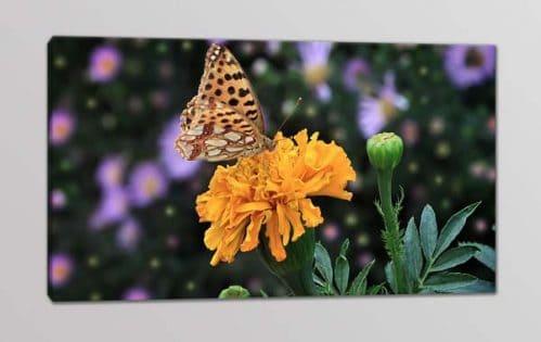 quadro moderno fiore farfalla