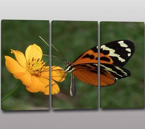 tris quadri moderni farfalla fiore
