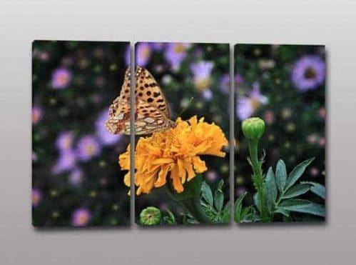 tris quadri moderni fiore farfalla