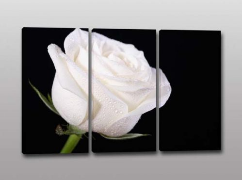 quadri moderni fiore rosa bianca