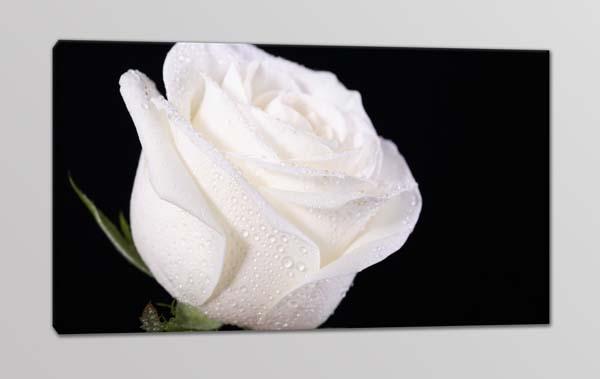 quadro moderno fiore rosa bianca
