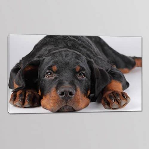 1 quadro moderno cane amico fedele