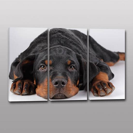 3 quadri moderni cane amico fedele