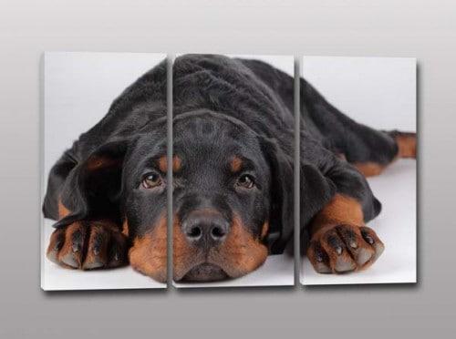 quadri moderni cane amico fedele