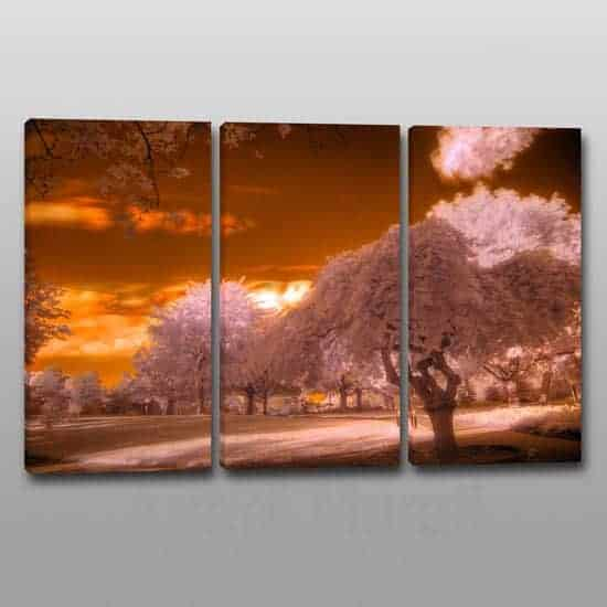 quadri moderni stampa paesaggio alberi 3 tele