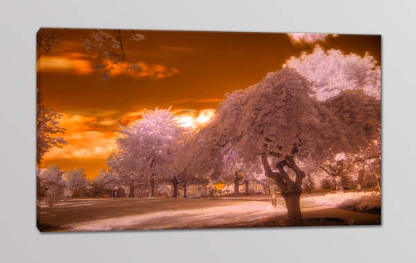 Quadro moderno paesaggio alberi