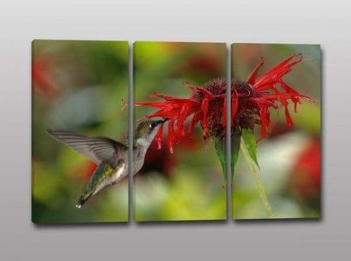 Tris quadri moderni colibrì fiore