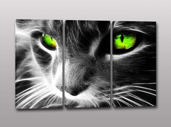 Tris di quadri moderni con stampa su tela dell'immagine di un gatto ...