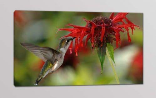 quadro moderno colibrì fiore