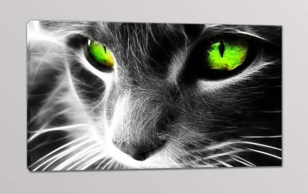 quadro moderno gatto occhi verdi