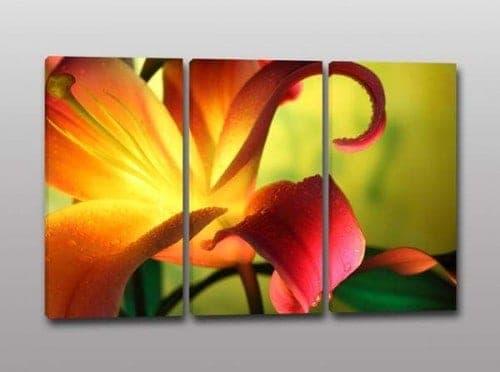 Quadri moderni fiore stampa tela
