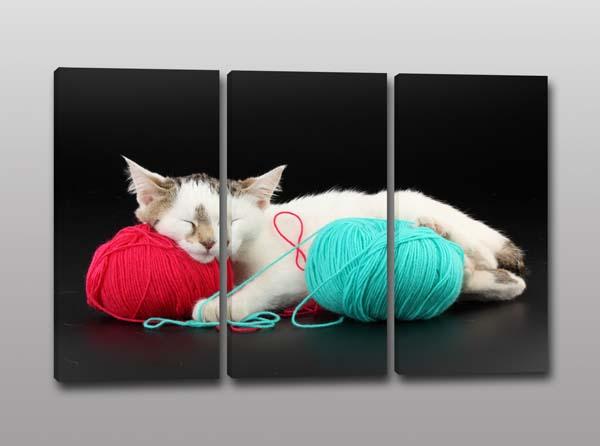 Tris quadri moderni stampa gatto