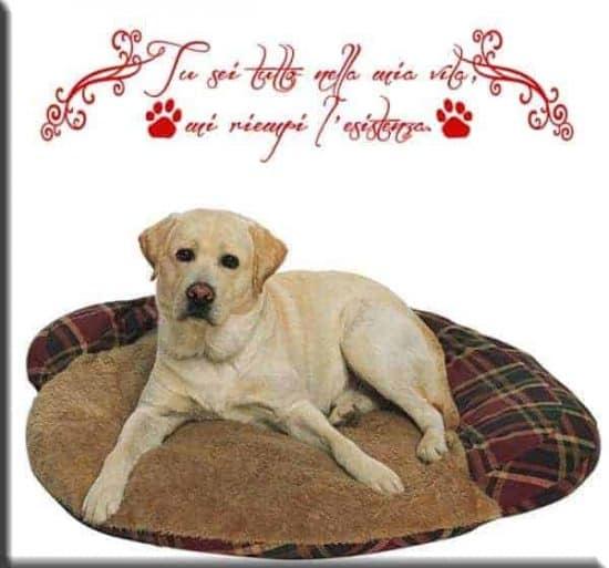 adesivi murali frase amico cane