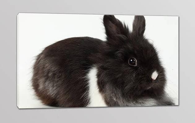 quadro moderno stampa coniglietto