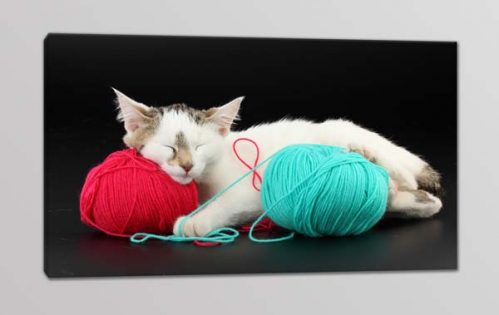 quadro moderno stampa gatto