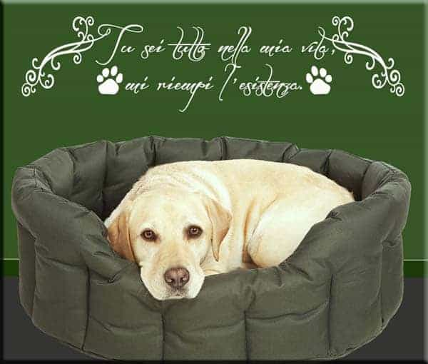 wall stickers frase amico cane