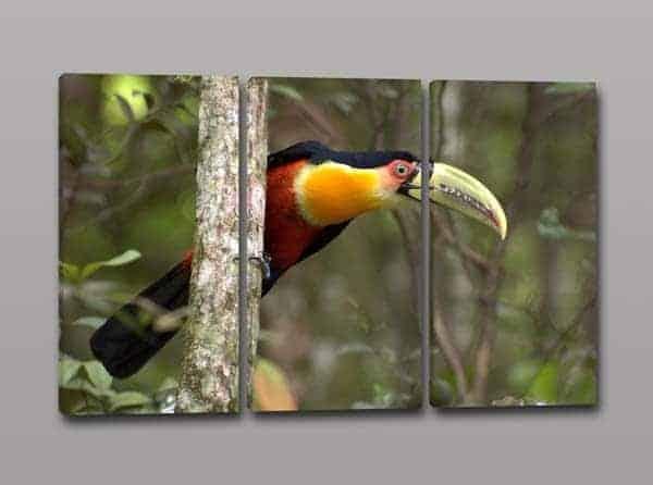 Tris quadri moderni tucano uccello