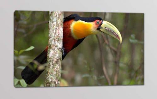 quadro moderno tucano