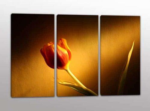 quadri moderni stampa fiore tulipano