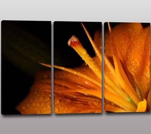 quadri tris tulipano : TRIS QUADRI MODERNI STAMPA FIORE COCCINELLA Q131