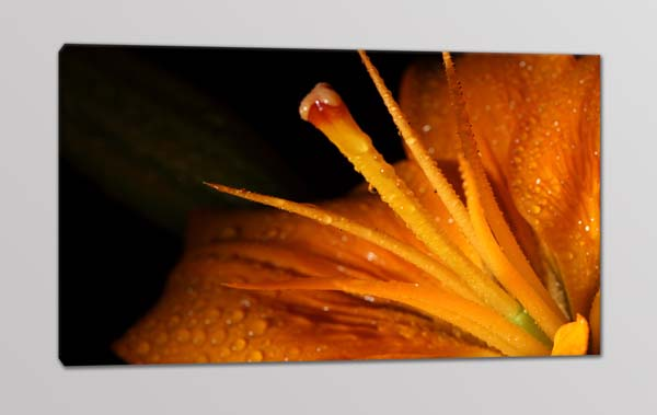 quadro-moderno-fiore-stampa-tela