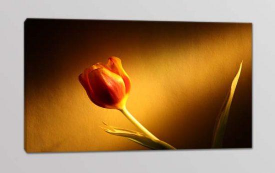 quadro moderno stampa fiore tulipano
