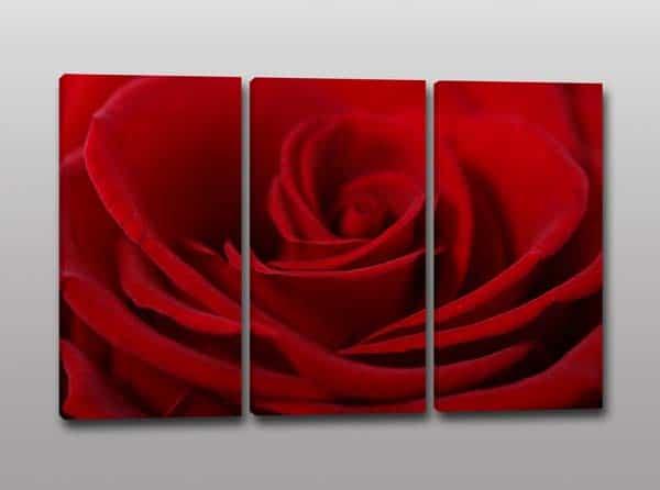 quadri moderni rosa rossa stampa fiore