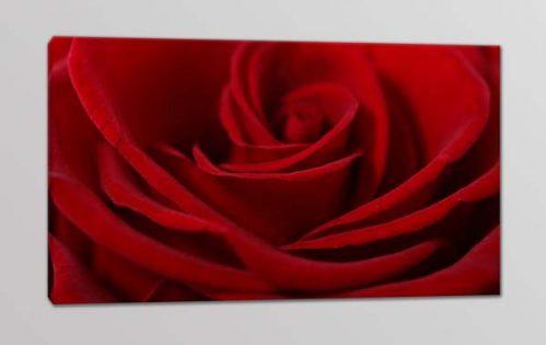 quadro moderno rosa rossa stampa fiore
