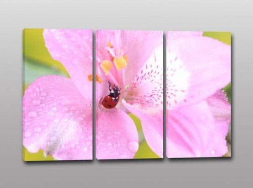 tris quadri moderni stampa fiore coccinella