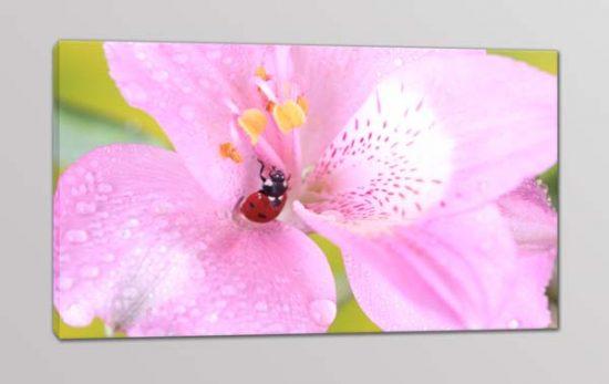 quadro moderno stampa fiore coccinella