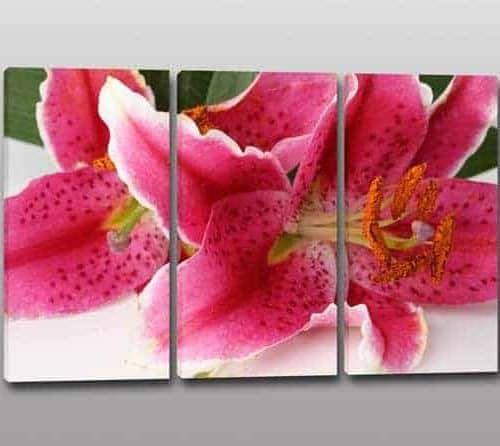 quadri tris tulipano : QUADRI MODERNI STAMPA FIORI ARREDO Q116