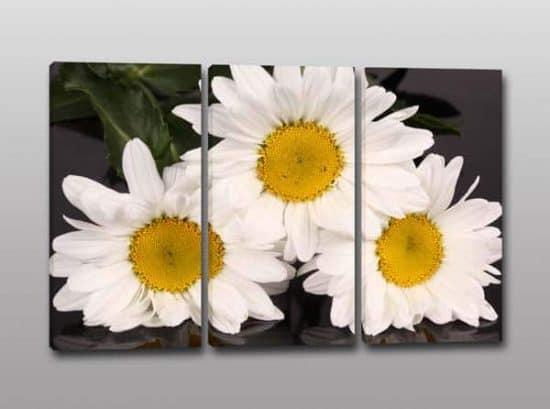 quadri moderni stampa fiori margherite