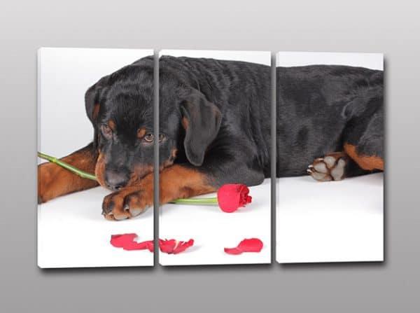 tris quadri moderni cane stampa tela