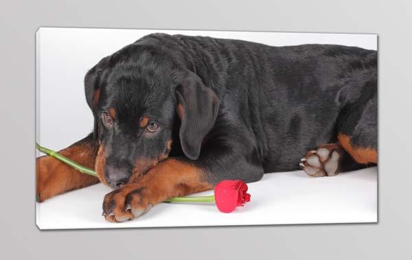 quadro moderno cane stampa tela